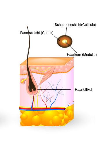 Die natürlichen Mittel der Wiederherstellung des Haares