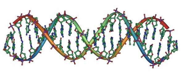 DNA-Doppelhelix
